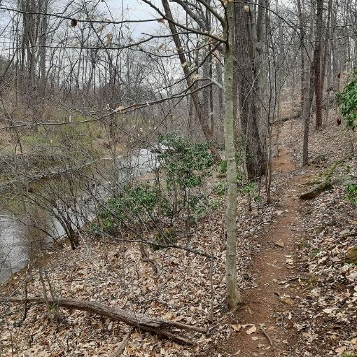 Trail along Moores Creek - Hancock Section, March 2021